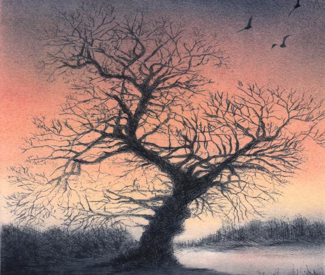 'Twisted Oak'