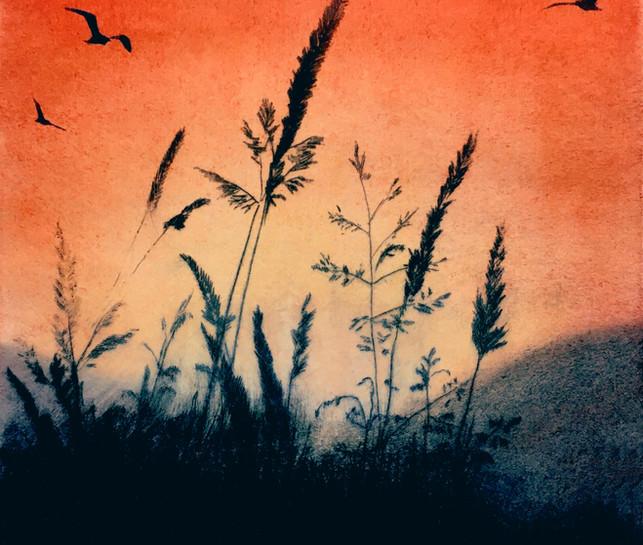 'Mountain Grasses'
