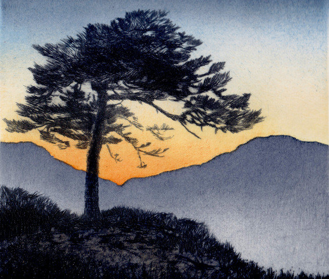 'High Pine lV'