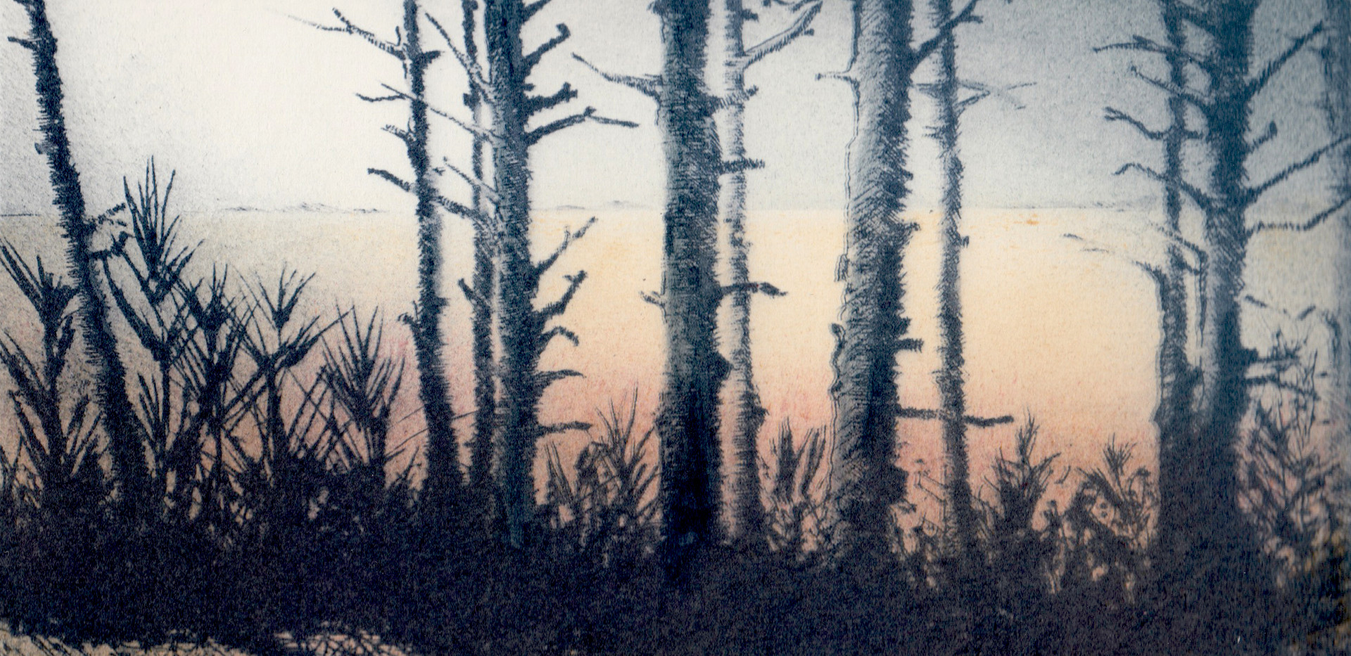 'Beyond the Pine Woods ll'