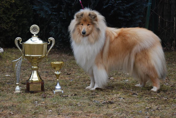Tina 18 months old with Trophy for BEST HUNGARIAN BRED COLLIE in 2017