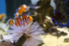 Aquario marinho 1.jpg