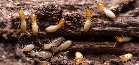 texas-termite-season-featured-image.jpg