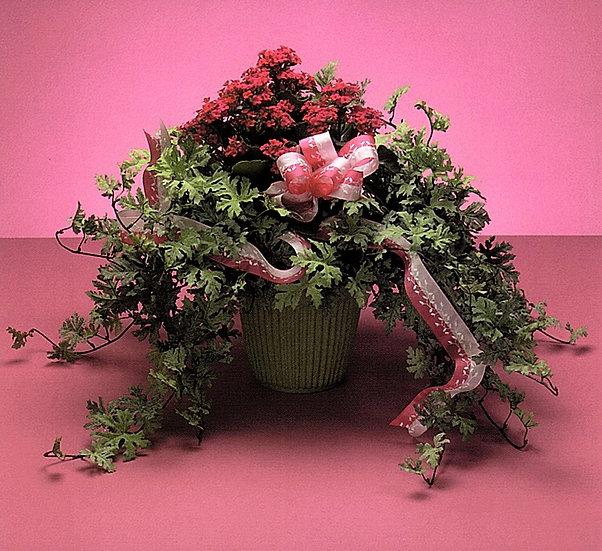 Potted Kalanchoe & Silk Foliage
