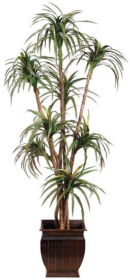 7.5' Yucca Tree in Tin Pot