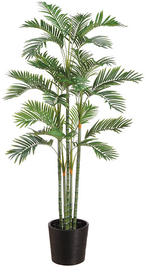 6' Areca Palm in Bamboo Container