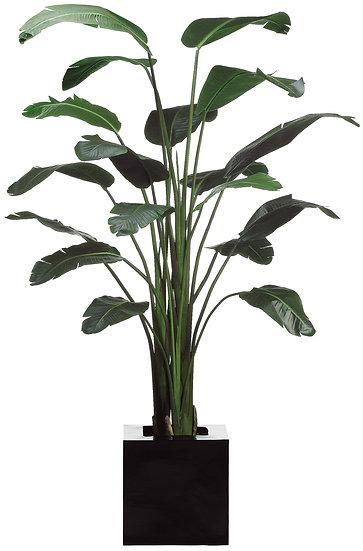 8.5' Bird of Paradise Plant in Resin Planter