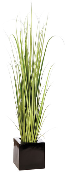 7' Reed Grass in Fiber Cement Planter