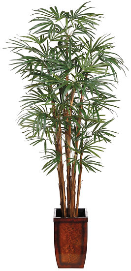 7' Honey Rhapis Palm in Wood Container