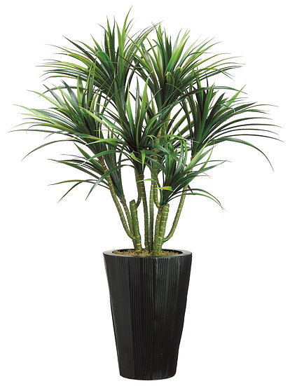 4.5' Dracaena in Metal Container