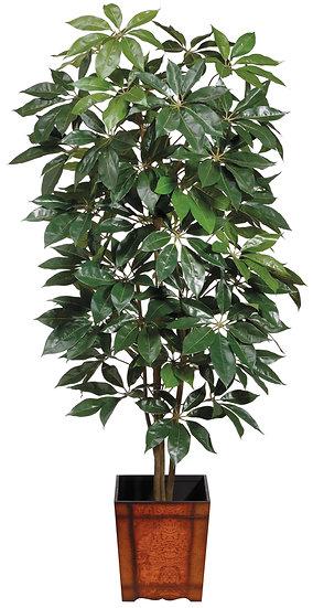 8' Schefflera Tree in Wood Container