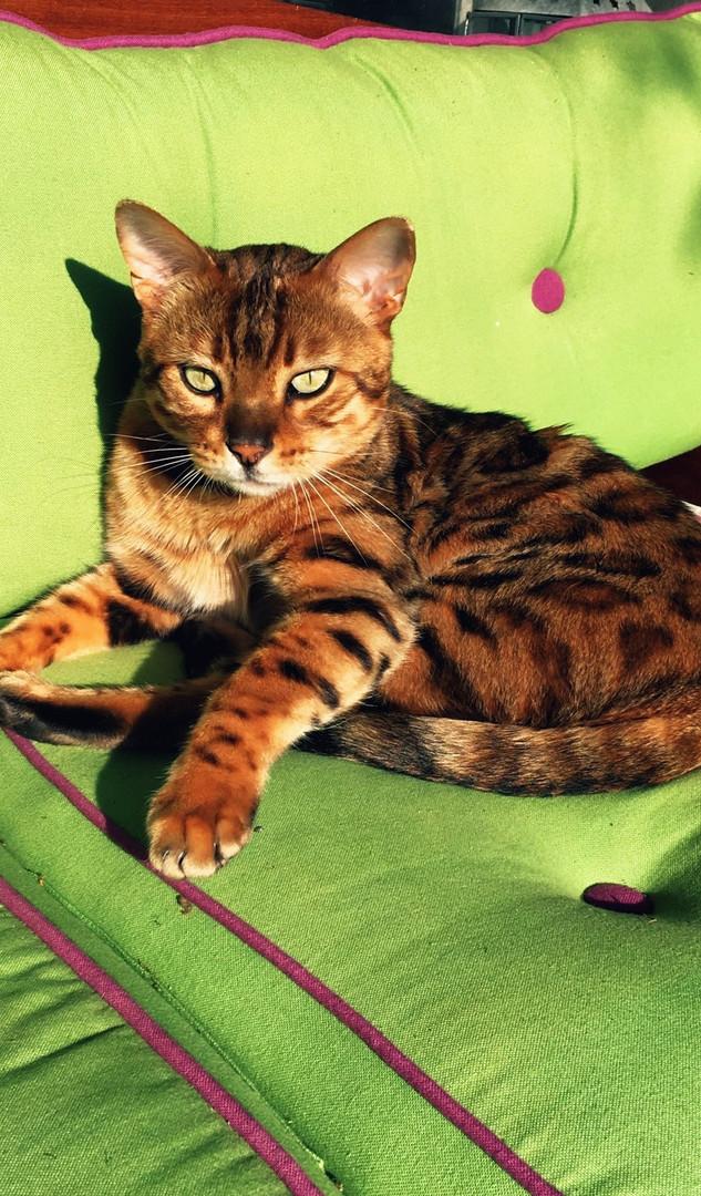 Katze2.jpg