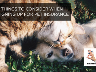 7 THINGS TO CONSIDER WHEN SIGNING UP FOR PET INSURANCE