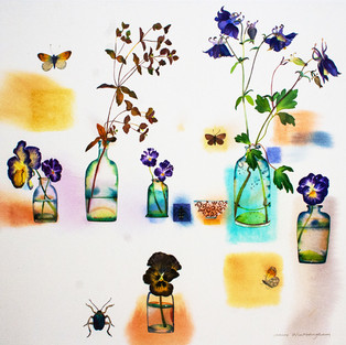 Pansies, Aquilegia and Butterflies