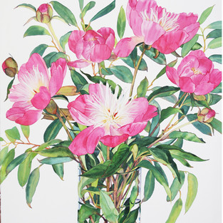 Bowl of Beauty Peonies
