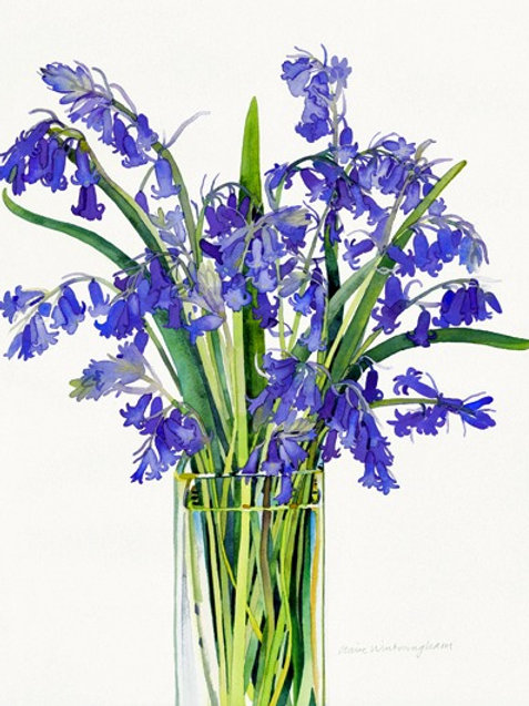 Bluebells - limited edition giclee print