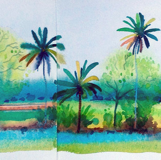 Palm Trees Kerala