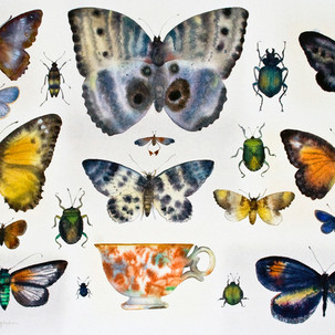 Butterlies and a Teacup
