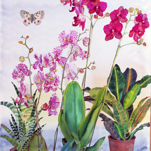 Orchids and Moth