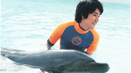Dolphin_Main.jpg