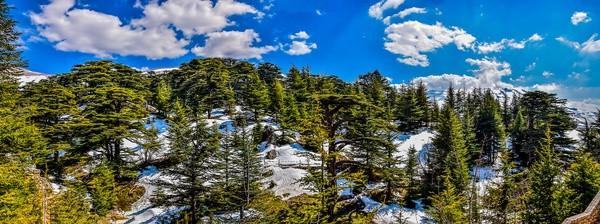 The Cedars Of God, Lebanon by Paul Saad