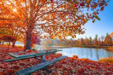 Fall by lake.jpg