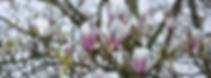 spring-1332999__340.webp