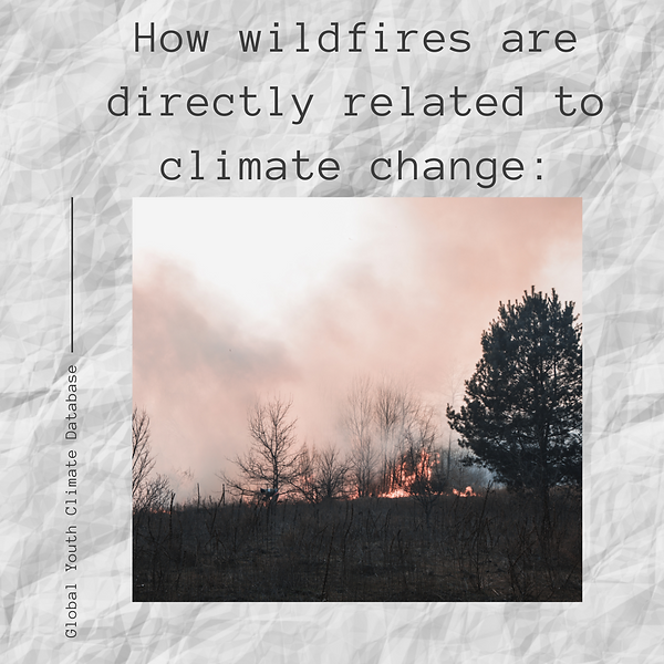 Wildfires and how they're connected to c