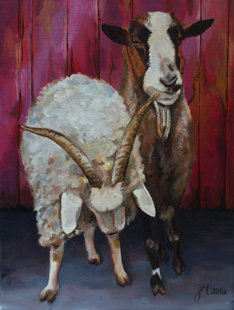 De geiten van de buren - olieverf op linnen - 30x40cm