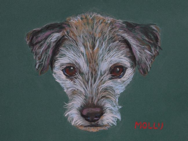 Molly - pastelkrijt op papier - 24x31cm