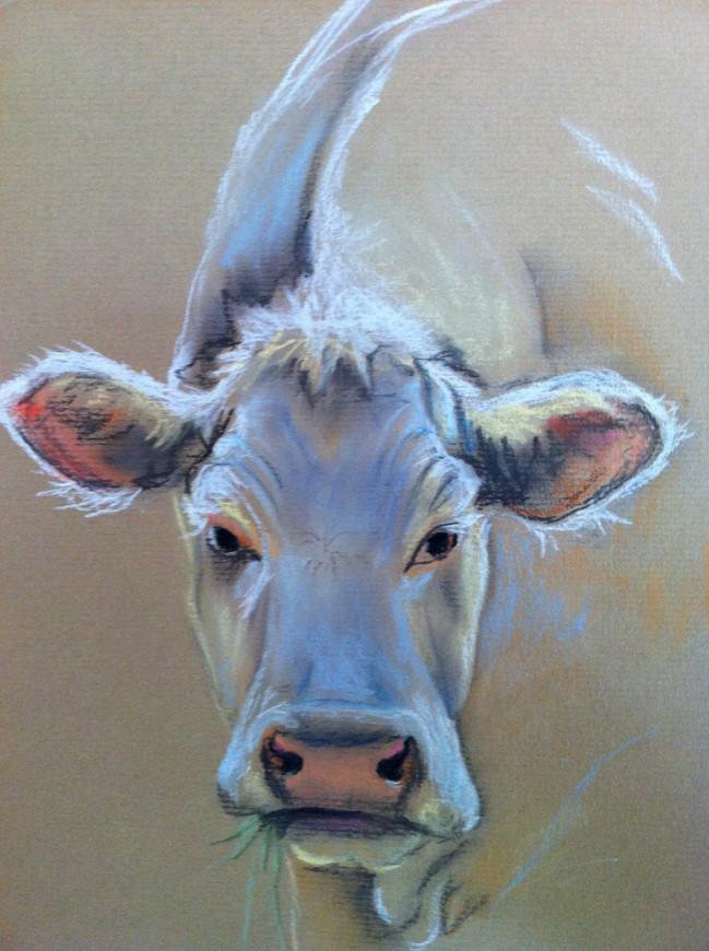 Blonde koe - pastelkrijt op papier - 23x29cm