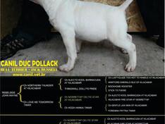 """A """"NOVA IMPORTAÇÃO"""" do """"CANIL DUC POLLACK"""""""