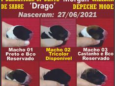 3 Lindos Filhotes MACHOS - disponíveis !!!!!!!!
