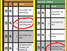 Cão de criação do CANIL DUC POLLACK arrebenta nas exposições !!!!!