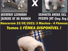 LINDA FILHOTE FÊMEA - JÁ FOI VENDIDA !!!!!