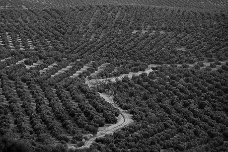 Organoleptic Evaluation I PURE I Olive'Secret