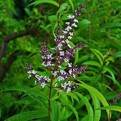 Herbs Stories I Greece I Olea Secret
