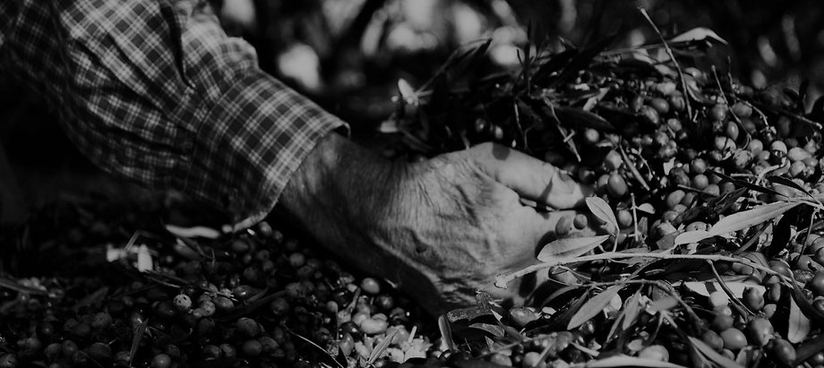 The Harvest I PURE I Olive'Secret