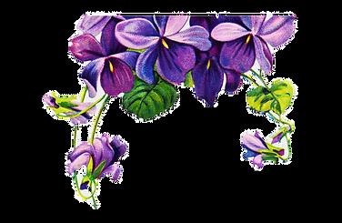PurpleRose2_edited.png