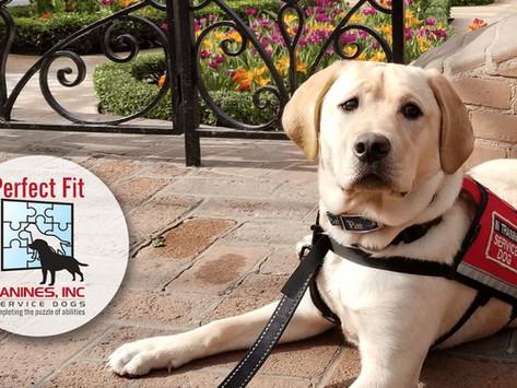 Diane's Diary #14: Seizure Detection Service Dogs Part 1