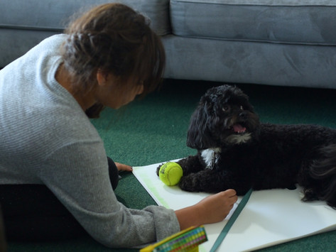 Diane's Diary #30: Filming Moby the Therapy Dog