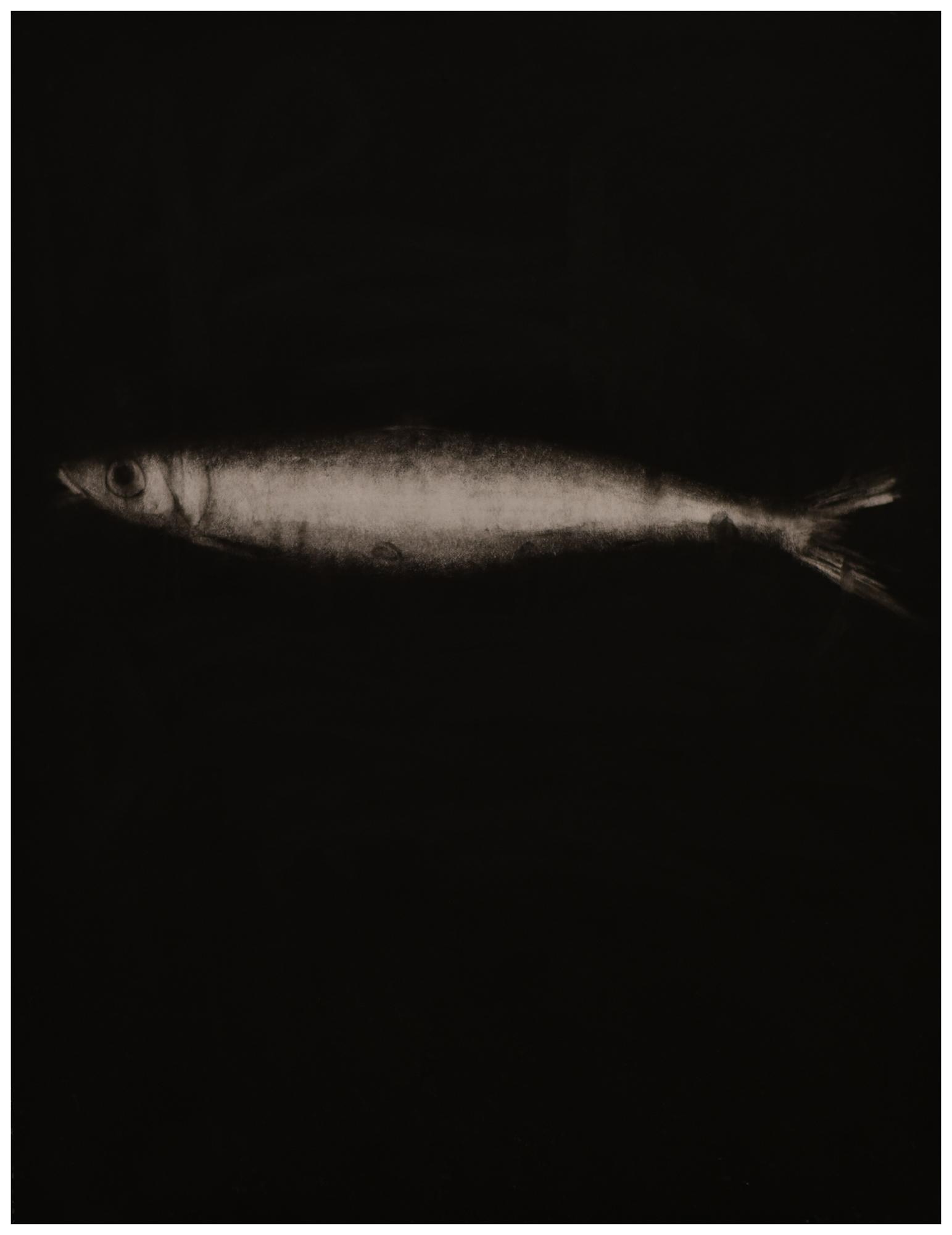 Fischli