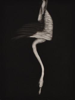 Dead Swan