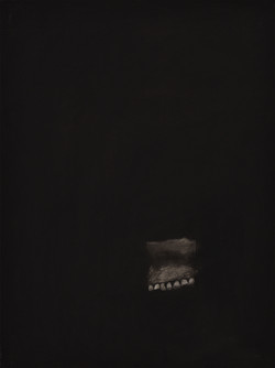 Teeth Fossil