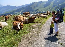 Oostenrijk.PNG