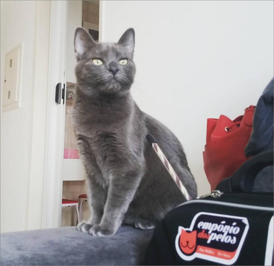 gatinho1-emporidos pelos