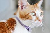 Cuidadora de Cachorro e Gato