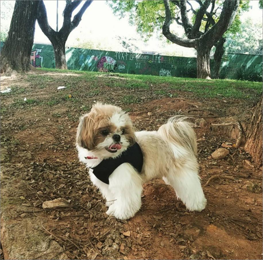 cachorros1-emporidos pelos
