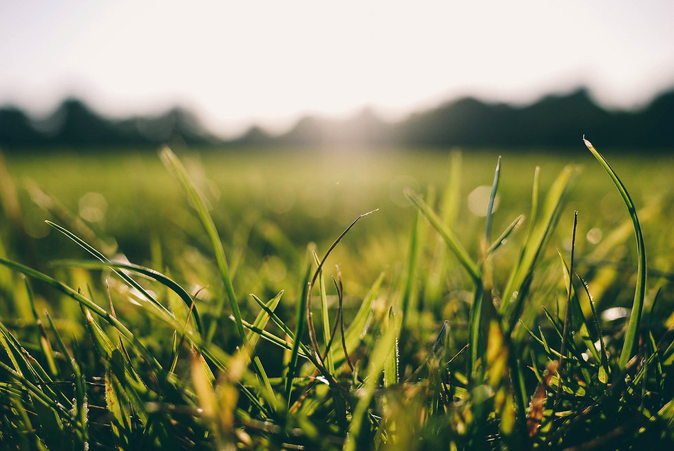Grass_Pexels2.jpg