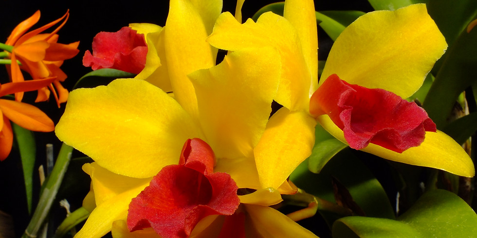 How to Successfully Grow Orchids on Your Windowsill!